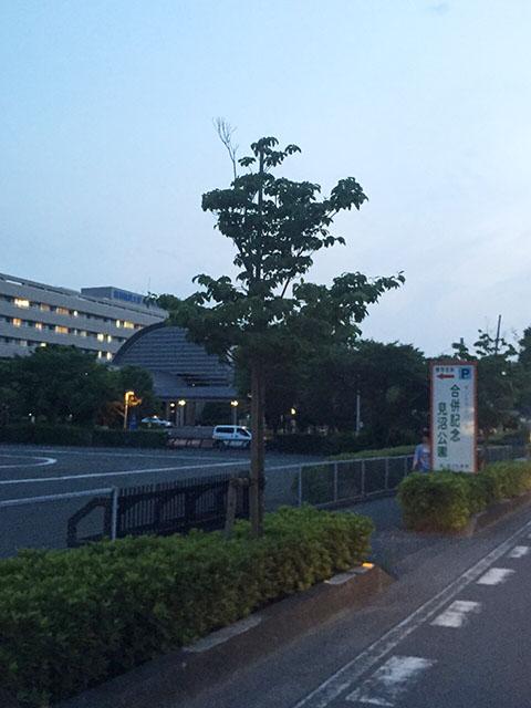 saitamashi-minumaku-minaminakamaru02